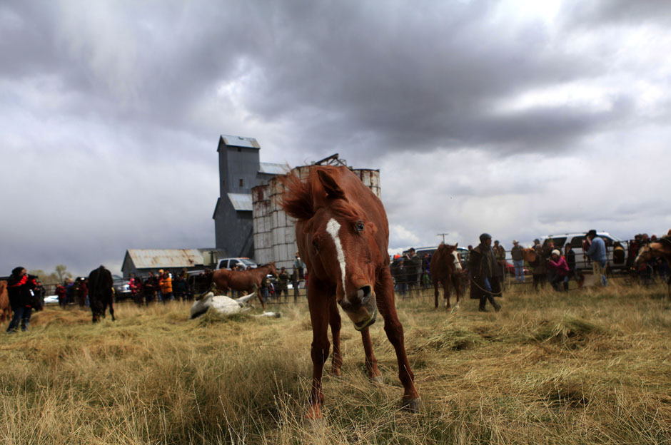 22Montanamontana horse060 Последние ковбои
