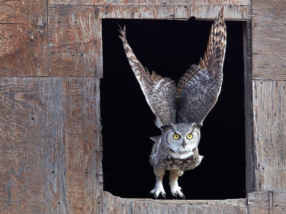 238 Обои для рабочего стола от National Geographic за апрель 2012