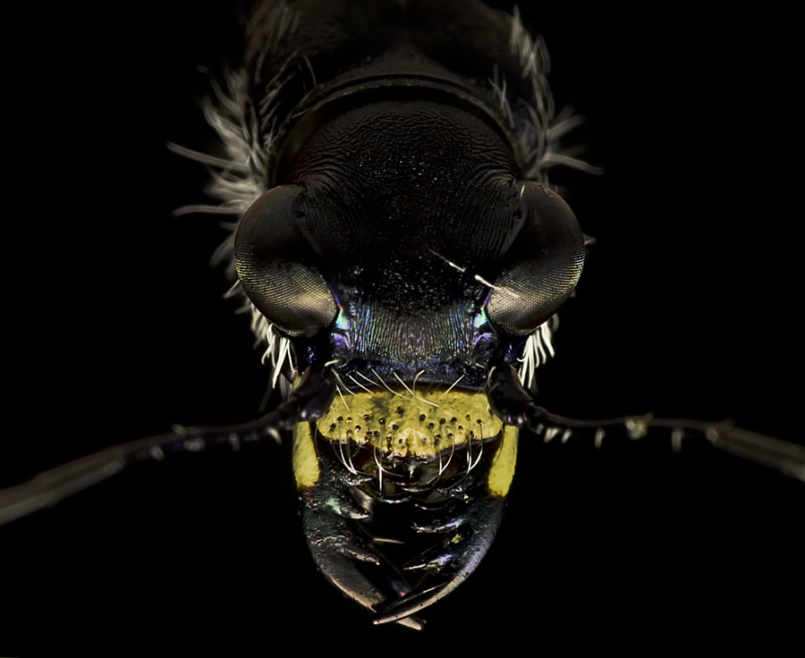 2381 Макро насекомые