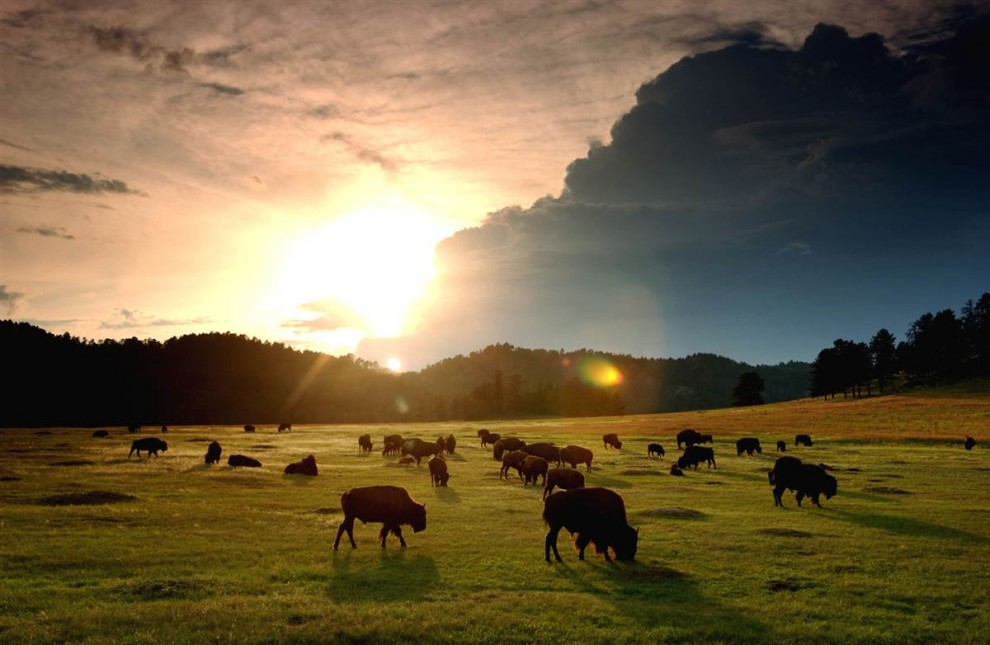 2415 Национальные парки США