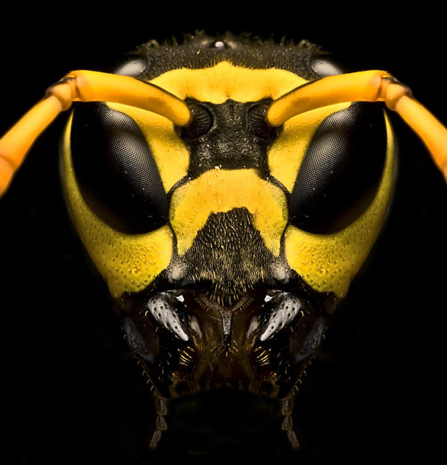2451 Макро насекомые