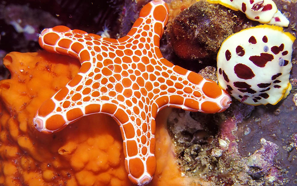 2537 Морская звезда