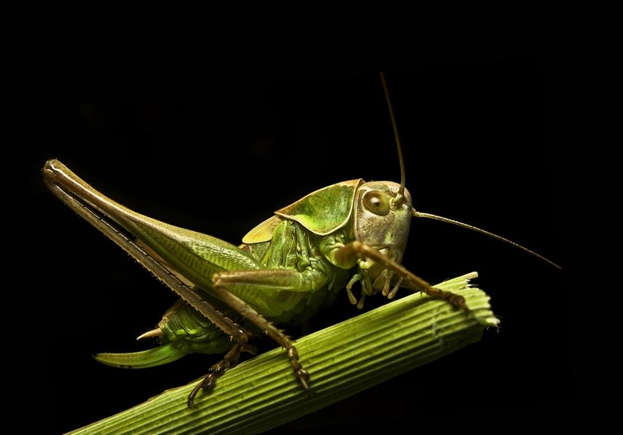 2547 Макро насекомые