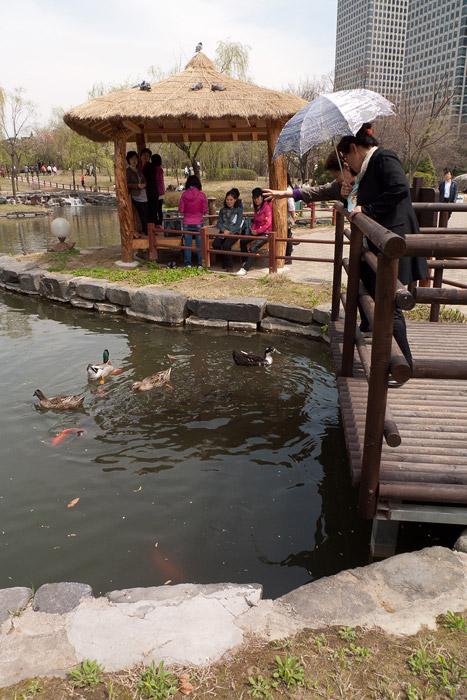 2637 Повседневная жизнь в Южной Корее