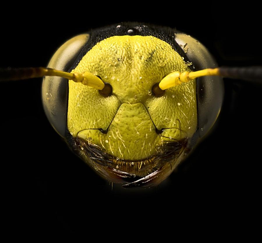 2641 Макро насекомые
