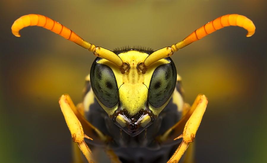 2835 Макро насекомые