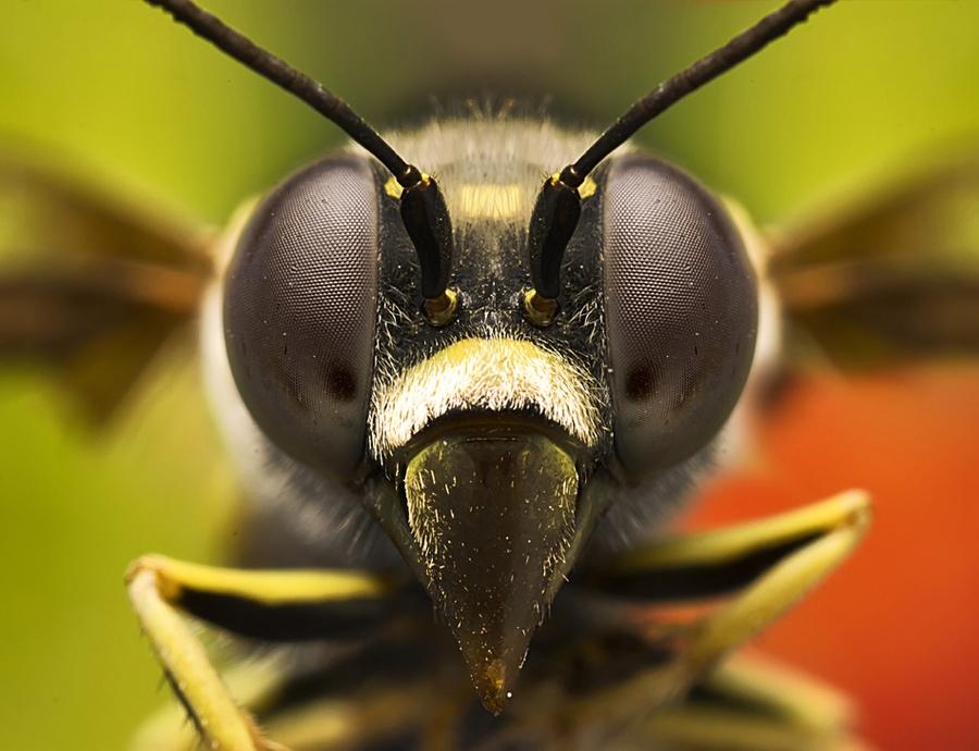 2934 Макро насекомые