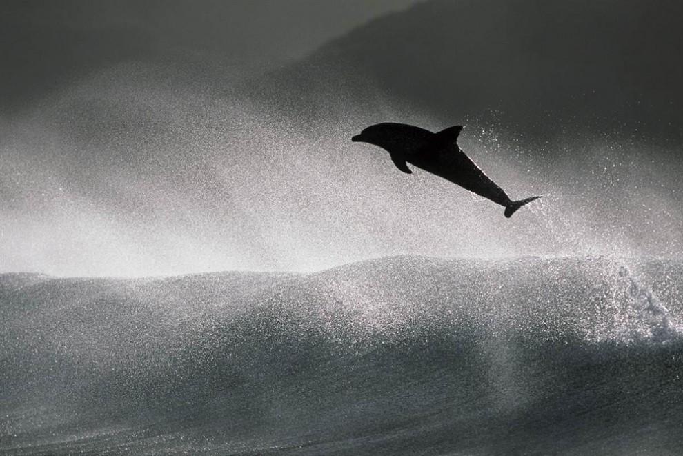 3 990x661 Танцы дельфинов