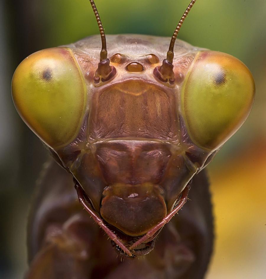 3029 Макро насекомые