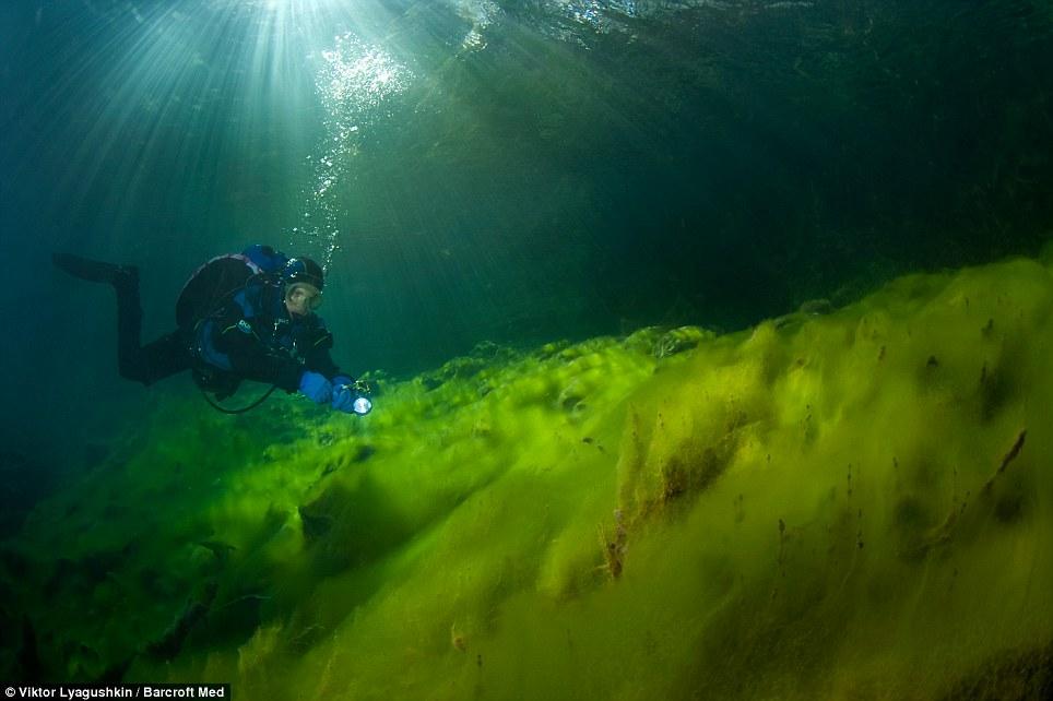 3101 Голубое озеро   неизведанный подводный мир