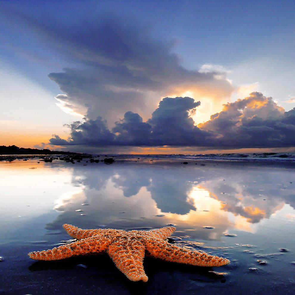 3164 Морская звезда