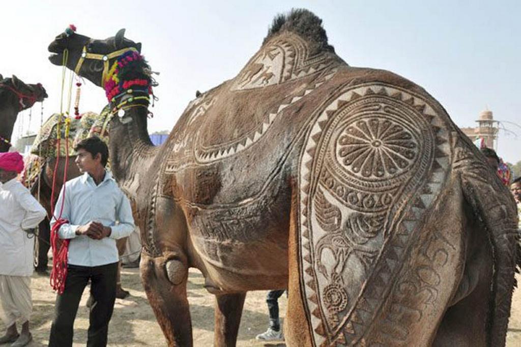 3256 Верблюжий арт