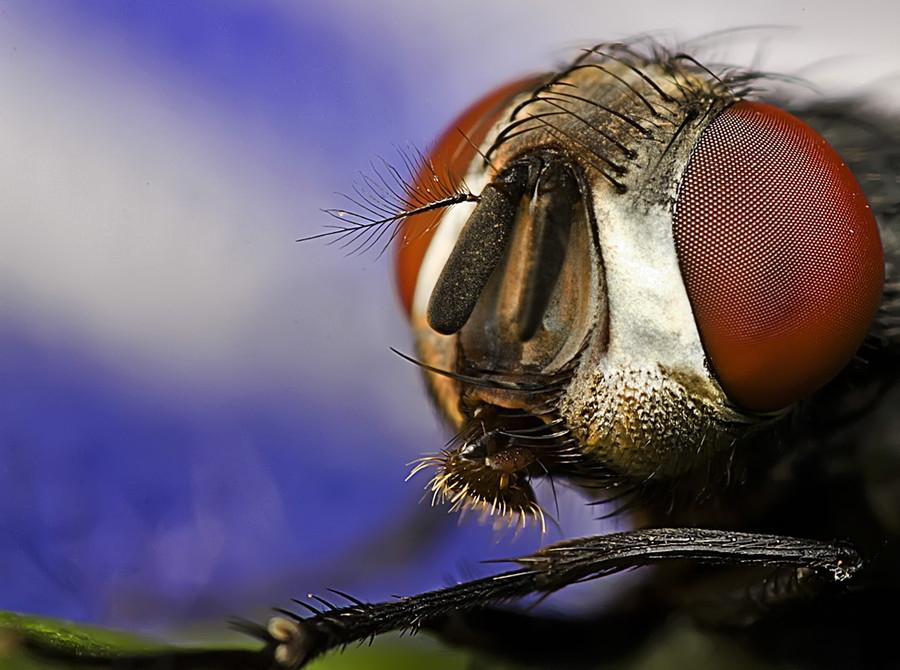 3263 Макро насекомые