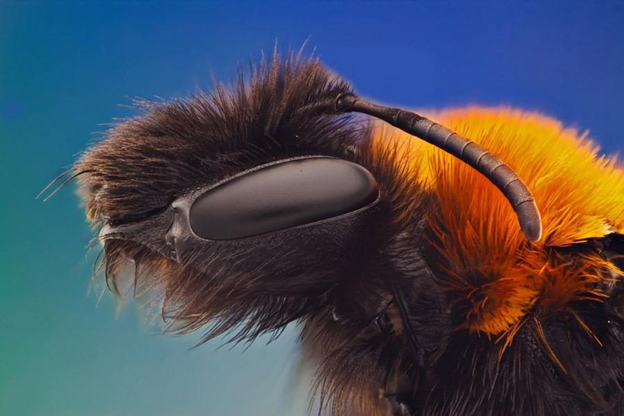 3264 Макро насекомые