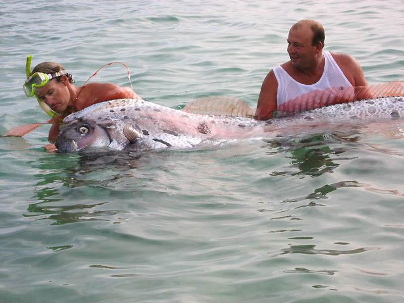 4188 Чудо рыба