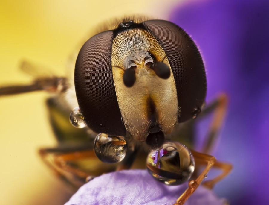 4221 Макро насекомые
