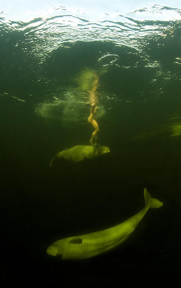 Голая женщина в ледяной воде с китами