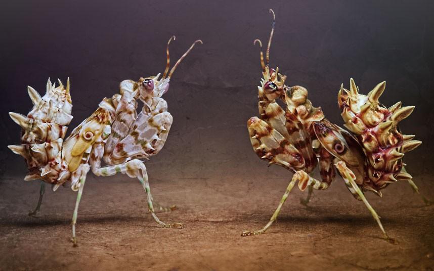 5101 عيون الحشرات إيغور Sivanovicha