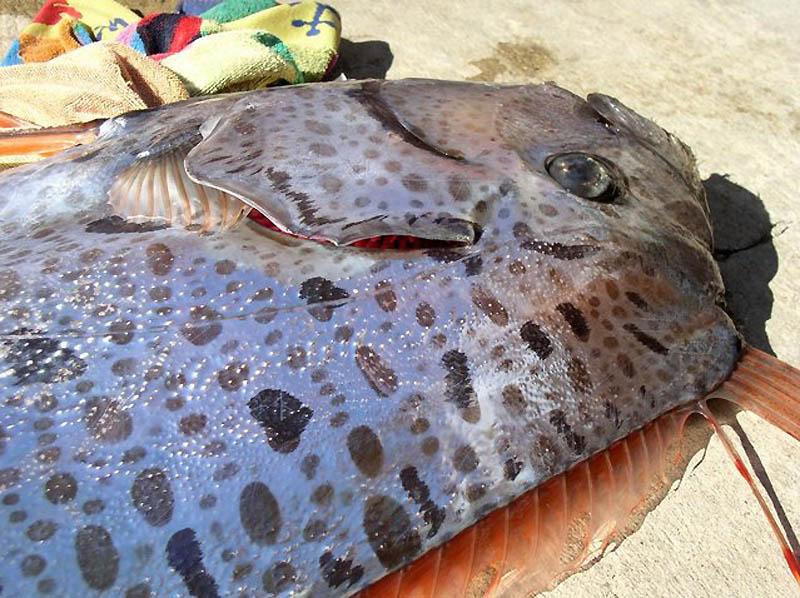 5172 Чудо рыба