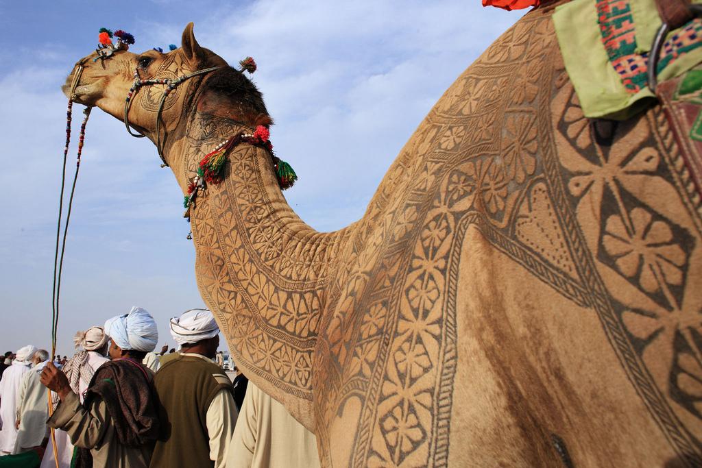 5192 Верблюжий арт