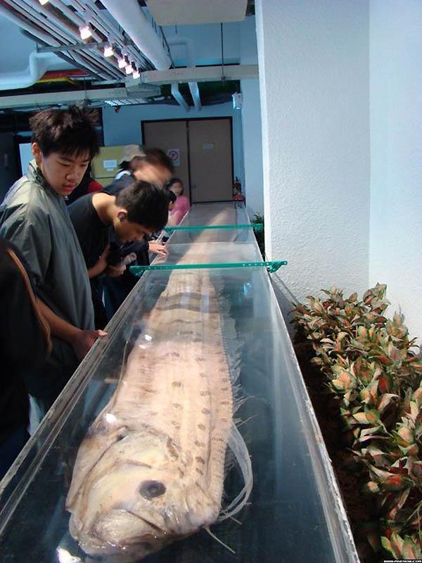 6166 Чудо рыба