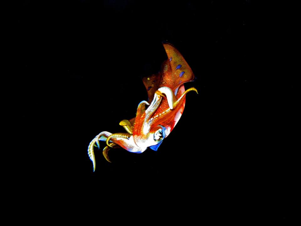 6172 Обитатели морских глубин