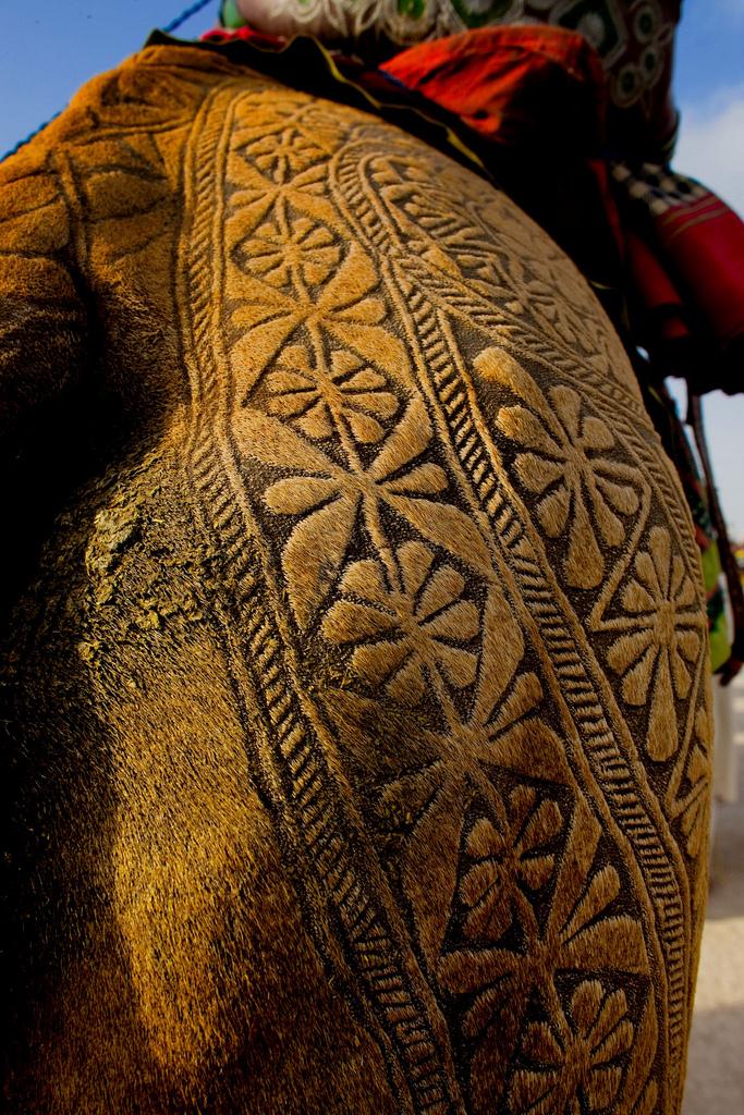 6186 Верблюжий арт