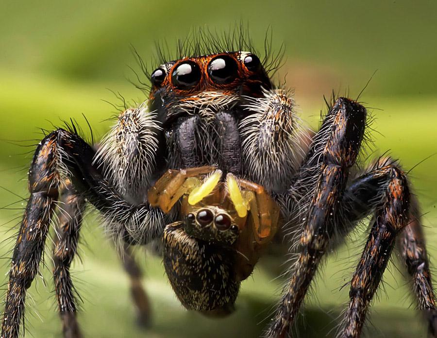 6193 Макро насекомые