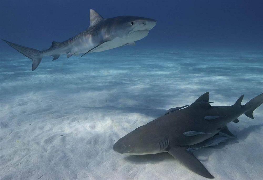 Лучшие подводные снимки 2012