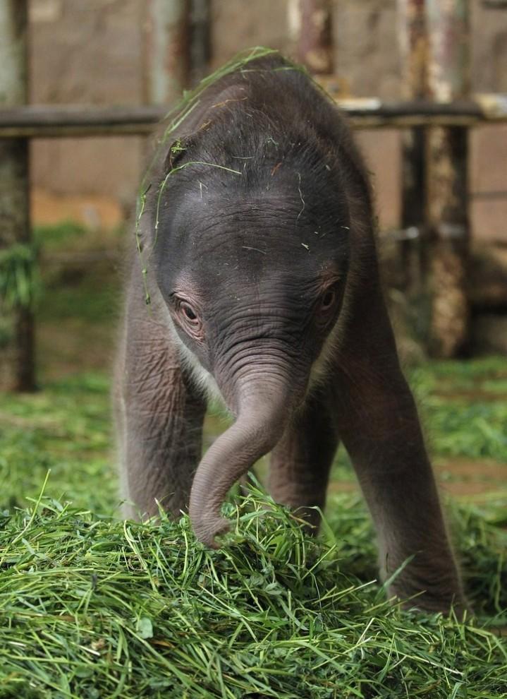 66 719x990 Двухдневный слоненок в Берлинском зоопарке
