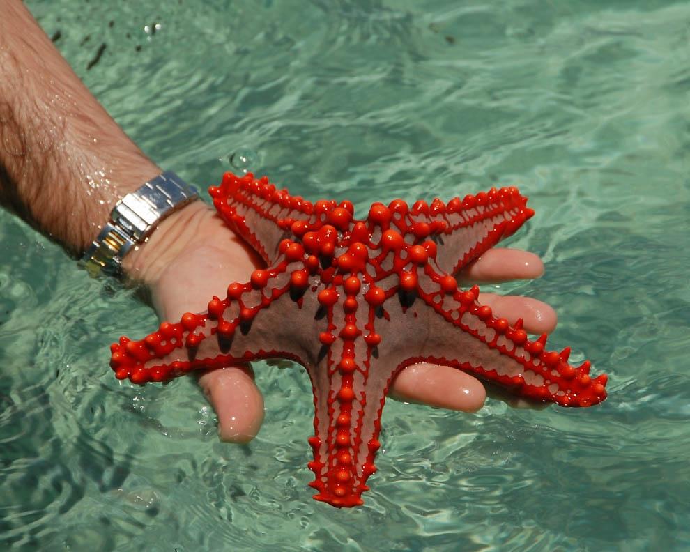 7102 Морская звезда