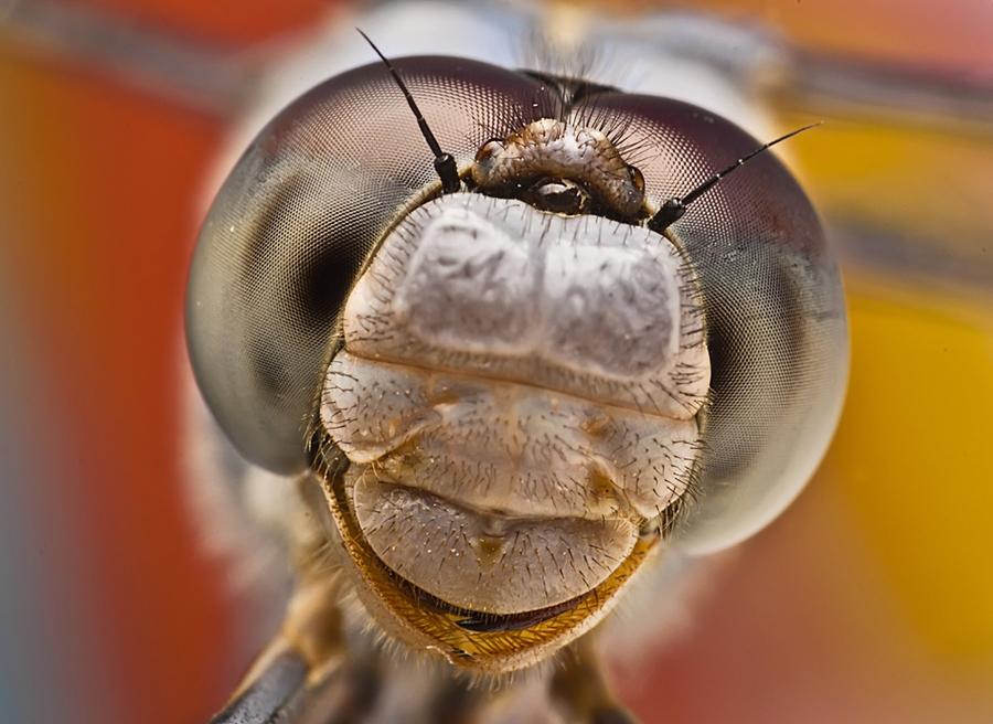 7178 Макро насекомые