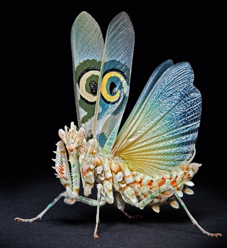حشرات 785 عيون إيغور Sivanovicha