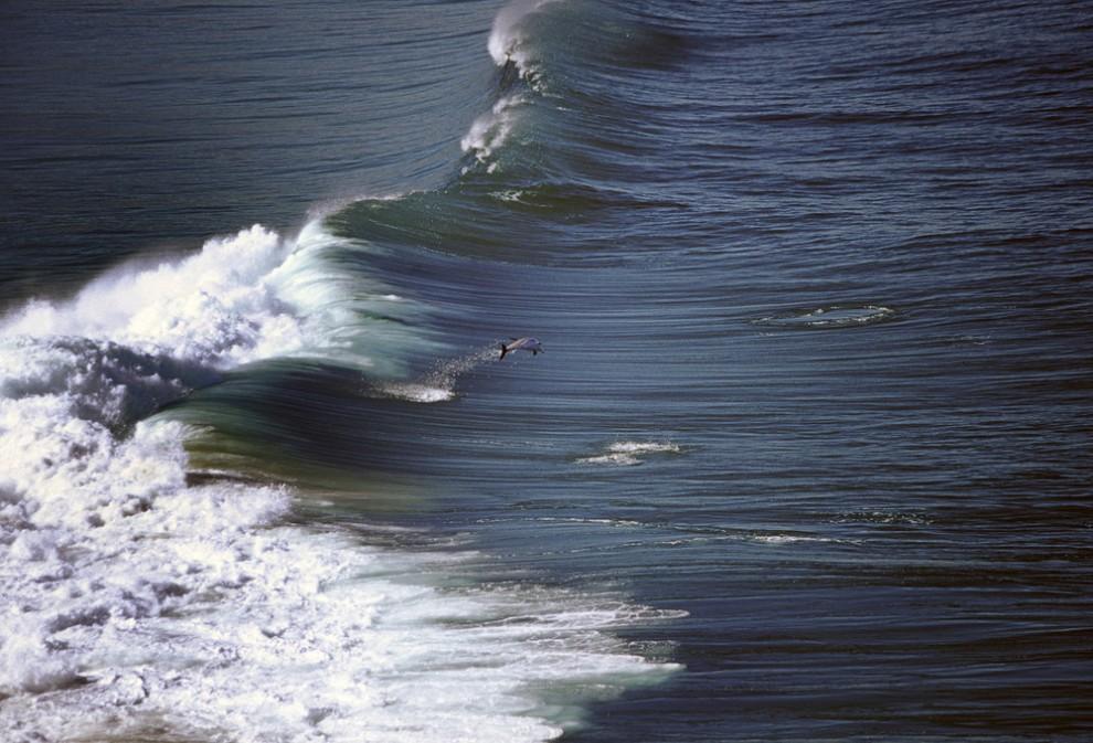 8 990x673 Танцы дельфинов