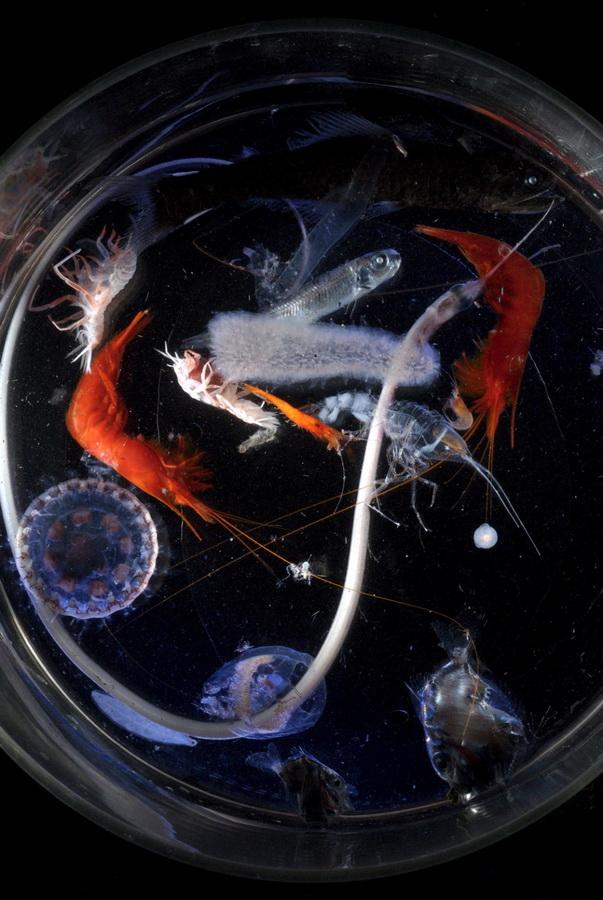 8151 Обитатели морских глубин