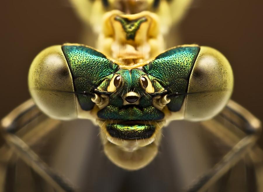 8169 Макро насекомые
