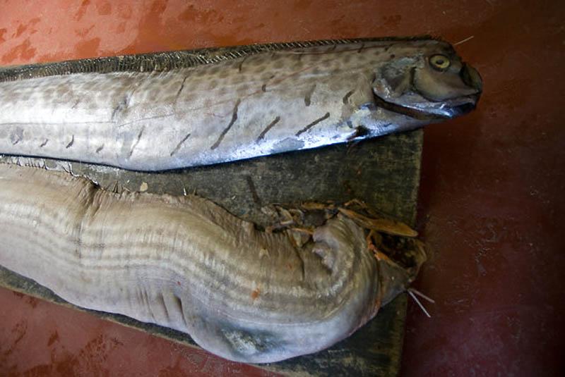 9139 Чудо рыба