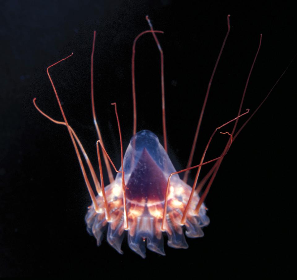 9145 Обитатели морских глубин