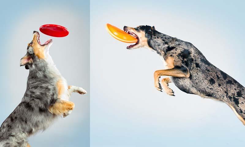 Прыгающие собаки в новом проекте Карли Дэвидсон «Аппорт!»