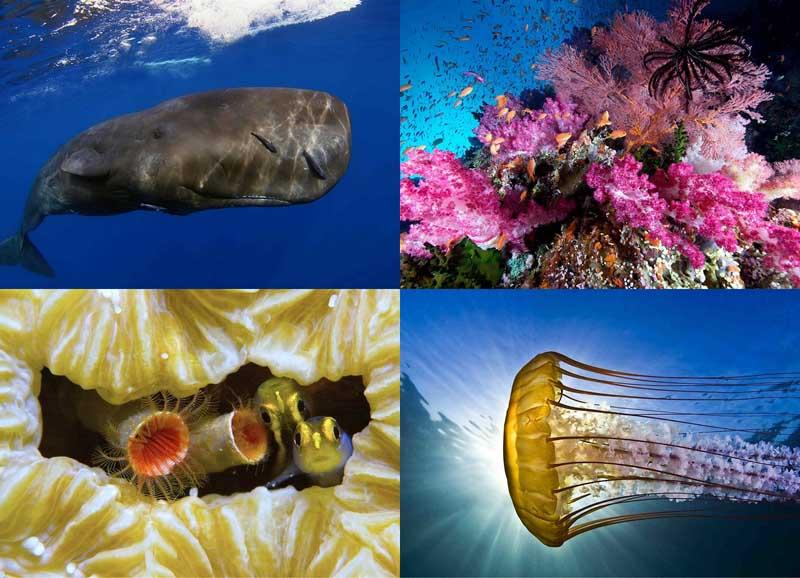 BIGPIC222 Лучшие подводные снимки 2012