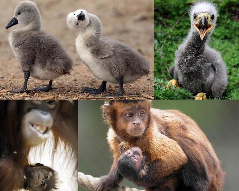 Трехмесячный кенгуренок Анабель и другие братья наши меньшие