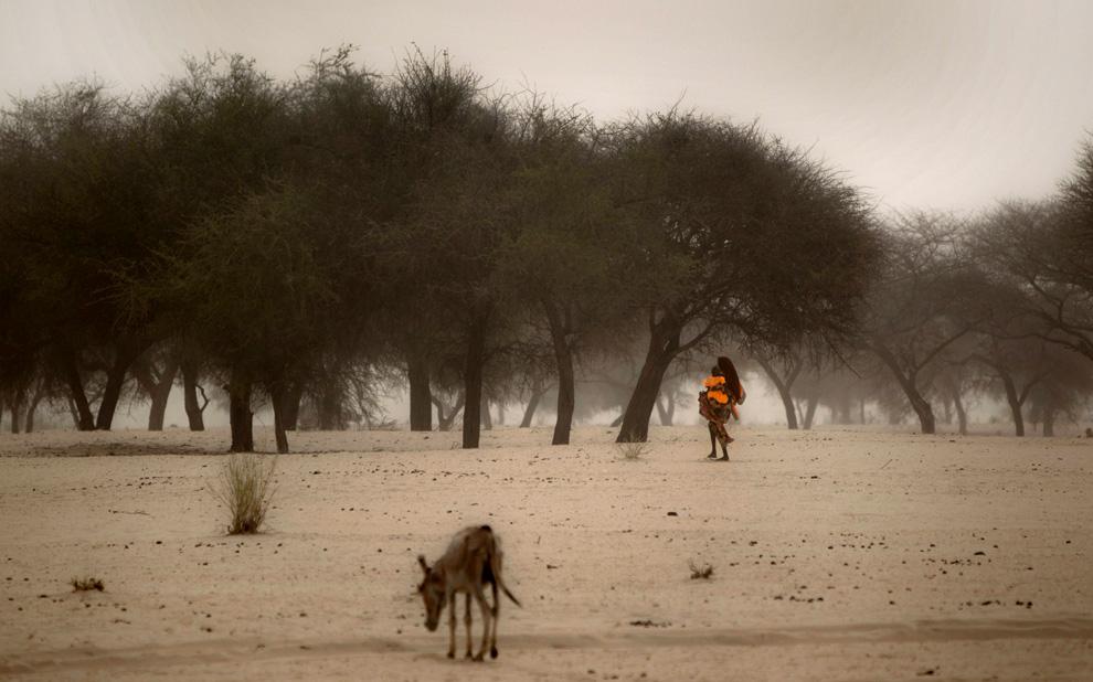 bp1 Продовольственный кризис в природной зоне Сахель в Африке