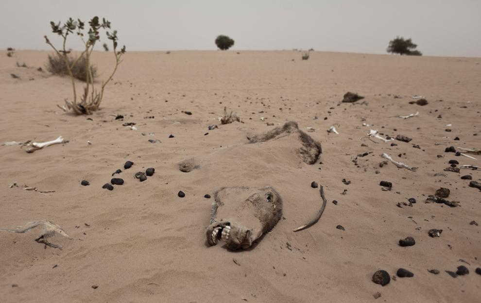 bp2 Продовольственный кризис в природной зоне Сахель в Африке