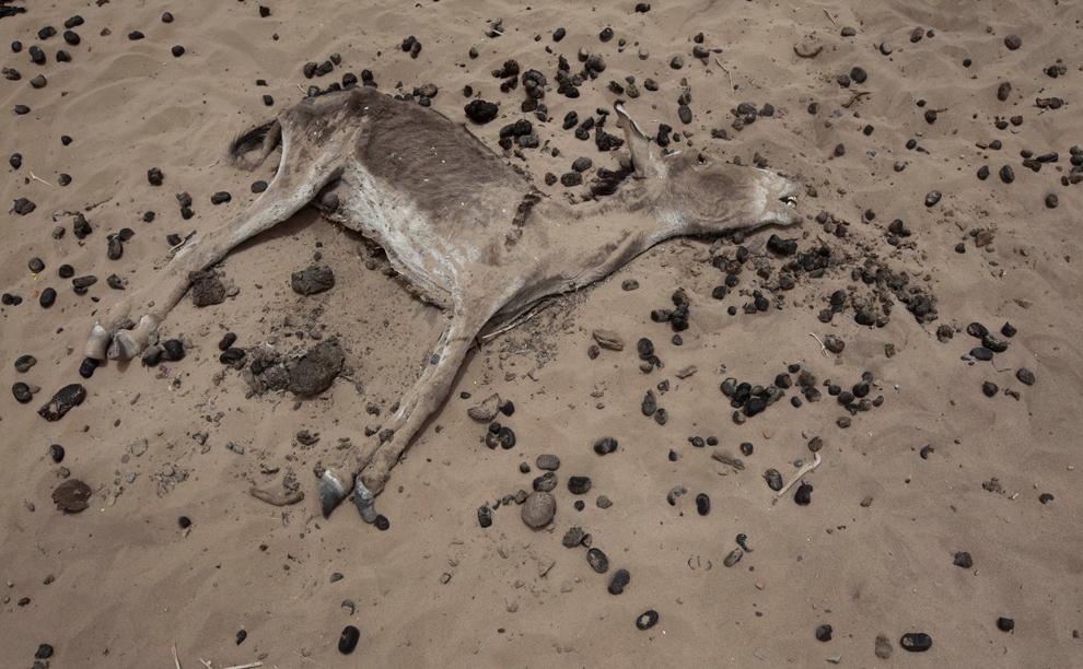 bp31 Продовольственный кризис в природной зоне Сахель в Африке