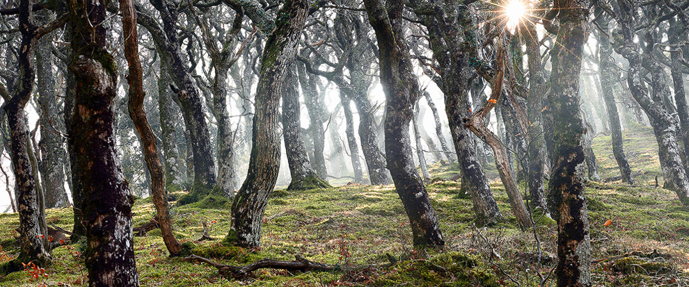 fotograf jeims epplton 27 Удивительные фотографии природы от мастера пейзажного фото Джеймса Эпплтона