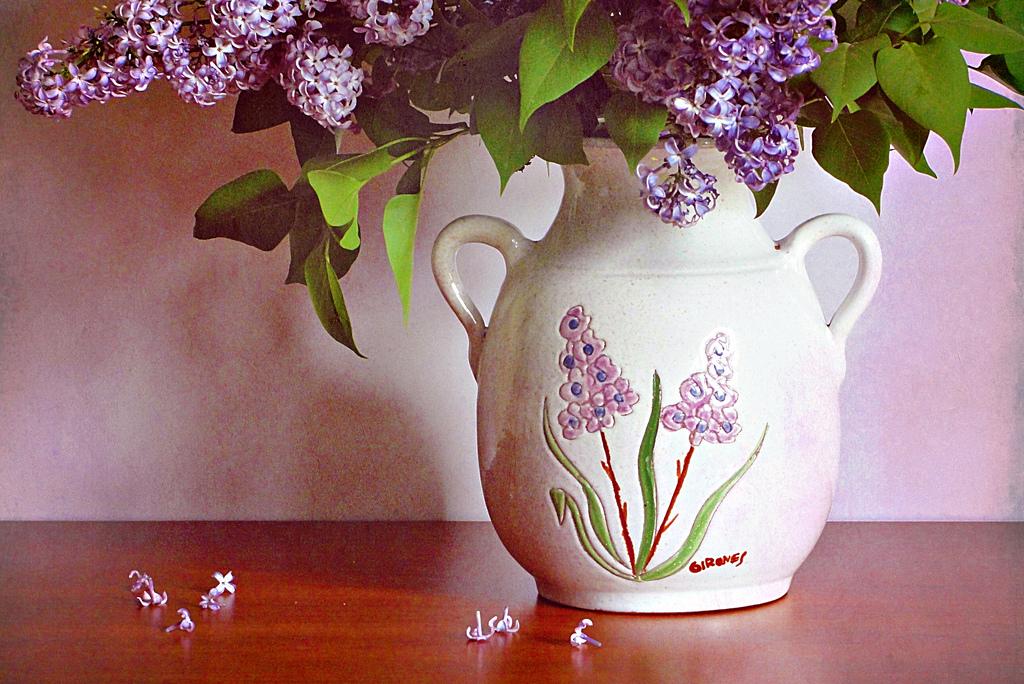 lilac08 Сирень в цвету
