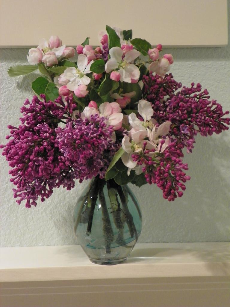 lilac17 Сирень в цвету