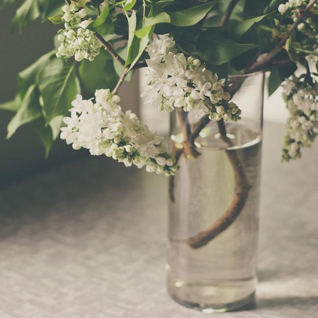 lilac24 Сирень в цвету