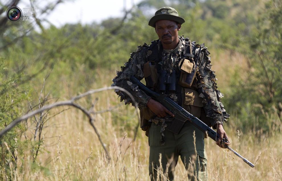 poaching 002 Браконьерство в Африке