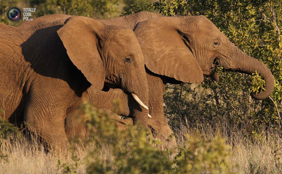 poaching 003 Браконьерство в Африке